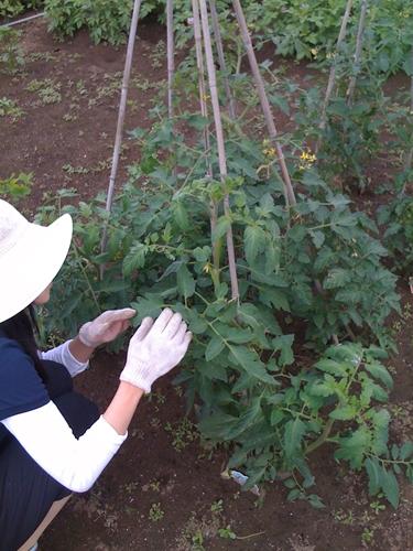 リノベーションで心豊かな北海道の暮らしを実現したい!-久保農園2