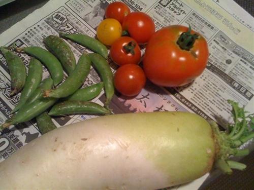 リノベーションで心豊かな北海道の暮らしを実現したい!-収穫した野菜
