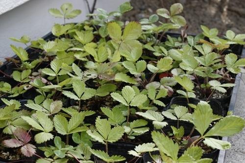 $リノベーションで心豊かな北海道の暮らしを実現したい!-外構の植物