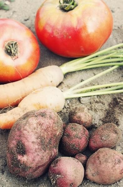 $リノベーションで心豊かな北海道の暮らしを実現したい!-収穫した野菜