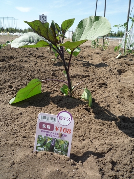 $リノベーションで北海道の豊かな暮らし-市民農園の野菜作り