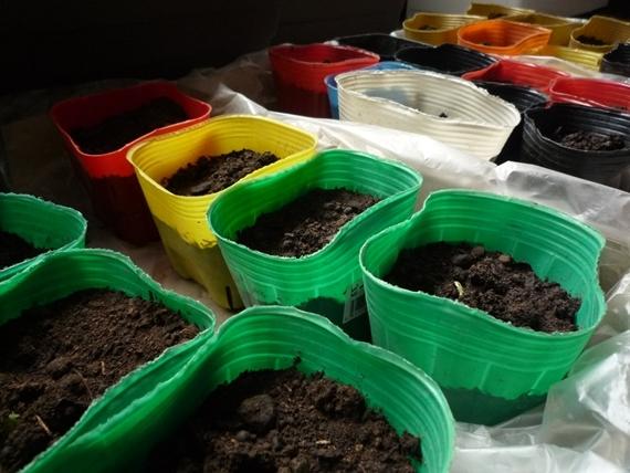 $リノベーションで北海道の豊かな暮らし-市民農園の野菜作り、枝豆