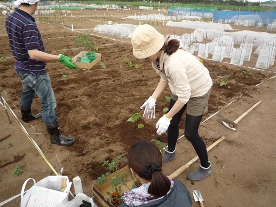 リノベーションで北海道の豊かな暮らし-札幌、市民農園での野菜作り