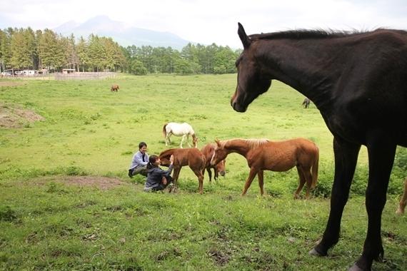 リノベーションで北海道の豊かな暮らし-大沼、シャロレー牧場、乗馬