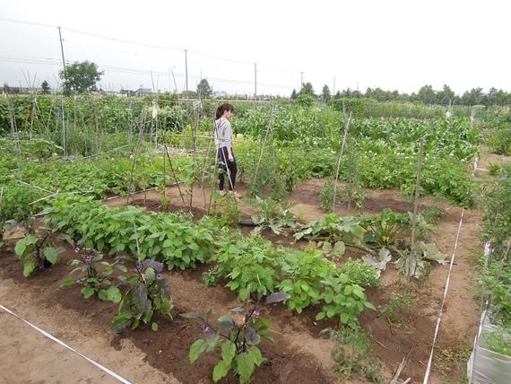 リノベーションで北海道の豊かな暮らし-市民農園の野菜